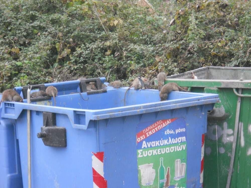 Photo of Τα χιλιάδες ποντίκια θα μεταδώσουν μολυσματικές ασθενειες οσο τα σκουπίδια δεν μαζεύονται..