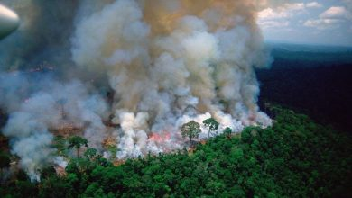 Photo of Αναλαμβάνει ο Στρατός για τη διάσωση του Αμαζόνιου…
