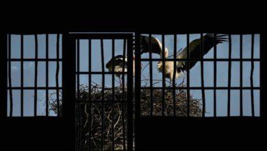 Photo of Γιατί μας έκλεισαν Φυλακή στα σπίτια μας ? Κορωνοϊός