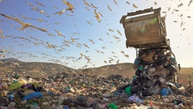 Photo of Χαμός με την εργολαβια μεταφοράς σκουπιδιών για Κοζάνη και την κανονιά οφειλής 1 εκ ευρώ.